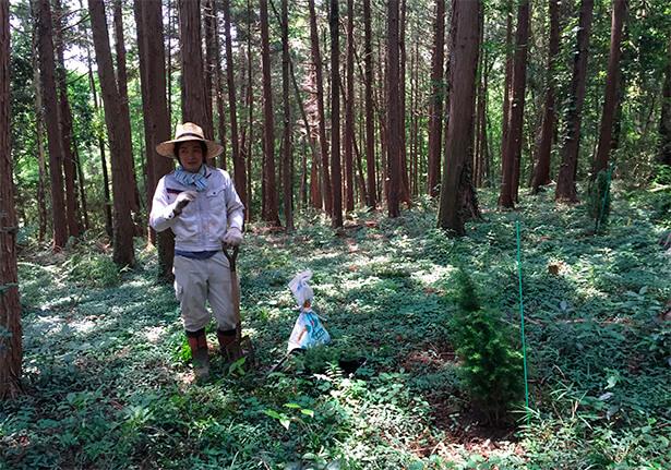 畑でジュニパーベリーの苗を育て、鹿山家が所有する杉林の一角に植樹。日当たりのよいところを好むため、ゆくゆくは周囲の杉を伐採予定。