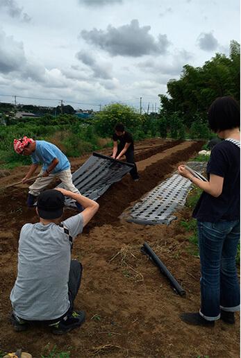 土を起こした後に、バジルの種を植えます。そのためのマルチシート(穴あきの黒いビニールシート)を張るところ。このシートを張ることで、雑草の繁茂を防ぎ、必要以上の雨水が浸透するのを防ぎます。2人がかりで広げていきます。