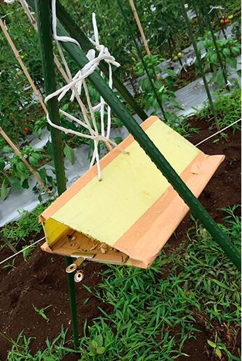 虫除けのために、このような仕掛けがあちこちに。これはお手製の「蛾取りホイホイ」。三角屋根の中は、ハエ取り紙。その中央に、蛾が好む香りを出すものを置いてあります。
